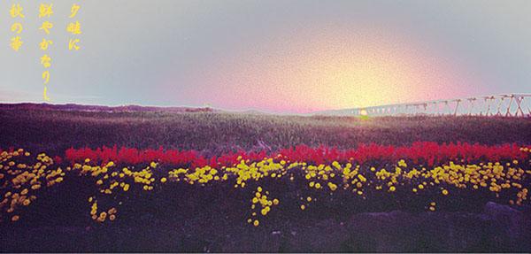 夕畦に鮮やかなりし秋の華